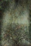 Scary trees Royalty Free Stock Photos