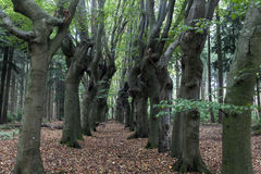 Scary trees in Zwolle area Royalty Free Stock Photography