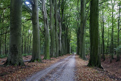 Scary trees in Zwolle area Stock Photography