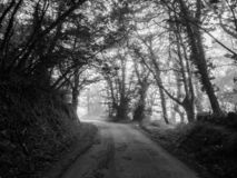 Scary woodland full of trees and rural way in a foggy day. Black stock photography