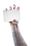 Scary zombie hand with space for text Stock Images