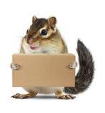 Scatola animale divertente della tenuta della tamia, concetto di consegna Immagini Stock Libere da Diritti