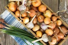 Scatola con cipolle su una vecchia porta Raccolto della cipolla agricoltura Fotografia Stock Libera da Diritti