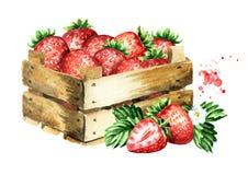 Scatola con le fragole mature Illustrazione disegnata a mano dell'acquerello, isolata su fondo bianco, royalty illustrazione gratis
