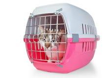 Scatola con una gabbia del gatto per trasporto. Fotografie Stock