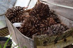 Scatola dei pinecones fotografia stock libera da diritti