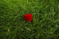 Scatola del cuore del velluto su erba Immagini Stock