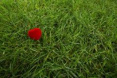 Scatola del cuore del velluto su erba Fotografie Stock Libere da Diritti