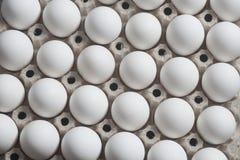 Scatola delle uova del cartone con le uova bianche del pollo i Immagini Stock