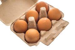 Scatola delle uova del cartone con sei uova marroni isolate Fotografie Stock Libere da Diritti