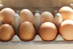 Scatola delle uova marroni fresche Fotografia Stock Libera da Diritti