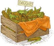 Scatola di legno con cereale giallo maturo Immagini Stock