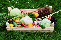 Scatola di legno con il raccolto delle verdure e del raccolto della radice sui precedenti dell'erba Fresco e alimento biologico Fotografia Stock Libera da Diritti