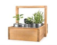 Scatola di legno con le latte di alluminio utilizzate come contenitori Fotografie Stock