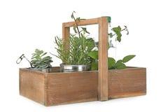 Scatola di legno con le scatole di alluminio e le bottiglie di plastica utilizzate come contenitori per le piante crescenti Immagini Stock