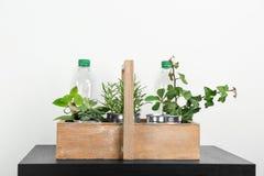 Scatola di legno con le scatole di alluminio e le bottiglie di plastica utilizzate come contenitori per le piante crescenti, Fotografia Stock Libera da Diritti
