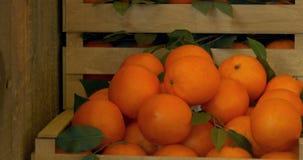 Scatola di di legno le arance archivi video