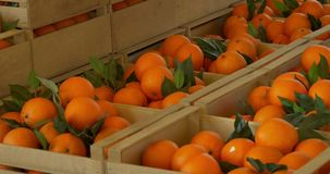 Scatola di di legno le arance video d archivio