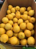 Scatola di limoni Fotografie Stock Libere da Diritti