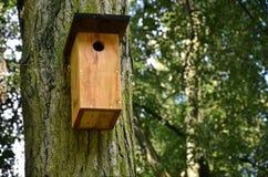 Scatola di uccello nella foresta Immagini Stock Libere da Diritti