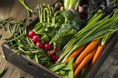 Scatola organica cruda del mercato degli agricoltori della primavera Fotografie Stock Libere da Diritti