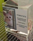 Scatola per la raccolta delle donazioni per cura veterinaria per gli animali senza tetto Fotografia Stock