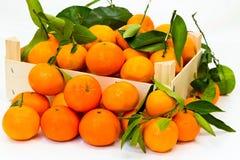Scatola in pieno di mandarino fresco con i fogli verdi Fotografia Stock