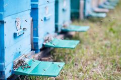 Scatole blu dell'alveare in arnia fotografia stock