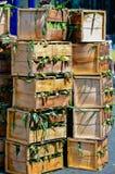 Scatole del mercato di spighe del granoturco Immagine Stock