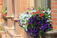 Scatole di finestra graziose del fiore nella costruzione di mattone immagini stock