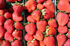 Scatole di fragole Immagine Stock
