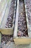 Scatole di legno della pianta immagini stock