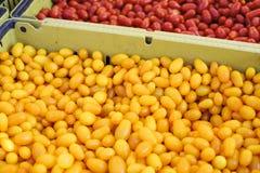 Scatole di pomodori gialli e rossi di cimelio fotografie stock libere da diritti