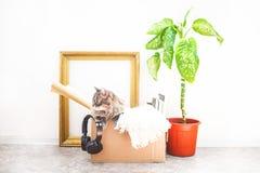 Scatole per muoversi con le cose, un gatto in una scatola, un fiore in un vaso, vecchia struttura su uno spazio bianco della copi fotografia stock libera da diritti