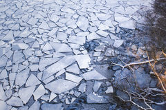 Scatter of crushed ice floes. Bare tree branches reaching out. Royalty Free Stock Photo