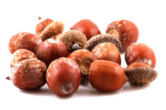 Scattered acorns. On white background Stock Image