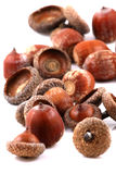 Scattered acorns Stock Photos
