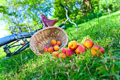 Scattered apricots Stock Image