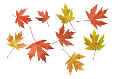 Scattered Autumn Leaves Background Royalty Free Stock Photos