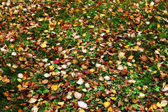 Scattered autumn leaves. On green grass Royalty Free Stock Photos
