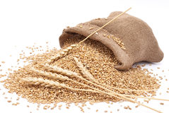 The scattered bag with wheat Royalty Free Stock Images