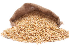 The scattered bag with wheat Stock Images