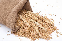 The scattered bag with wheat of a grain Royalty Free Stock Photo