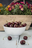 The scattered cherries in a white bowl stock photography