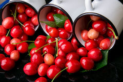 Scattered cherry from enamel cups. Cherries in iron cup on black background. Healthy, summer fruit. Cherries. Three. Close up. Royalty Free Stock Images