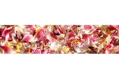 Scattered colored flower petals border on blurred background close up, delicate flowers petals soft focus frame stock photo