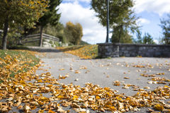 Scattered colorful autumn leaves on a road. Scattered colorful autumn leaves lying on the asphalt on a rural road depicting the changing weather and seasons stock images