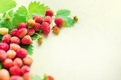 A scattered crop of wild strawberries. Red ripe berry on a light background. Diet Concept Food Light Banner Tinted. stock photos