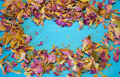 Scattered dried petals of tea rose on blue background with place for your text. Scattered dried petals of tea rose on blue background Stock Photography