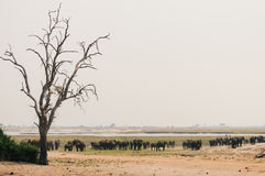 Scattered Elephants Stock Images